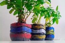 Все для растений