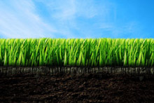 Газонна трава